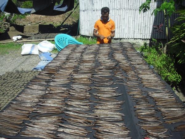 Vérification du séchage de la Vanille par le pépiniériste Aris WULI (1)