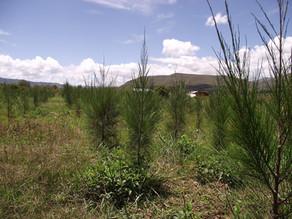 [Fermé] Volontariat Madagascar - Diagnostic forestier
