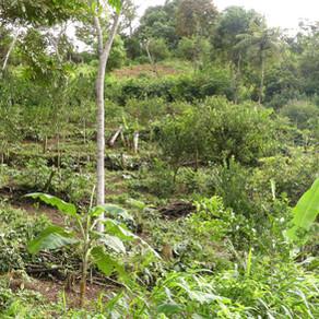 [Fermé] Volontariat Bolivie - Diagnostic forestier