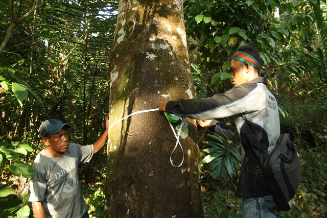 Coeur de Forêt © Indonésie