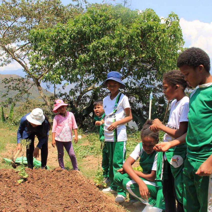Reforestation et biodiversité
