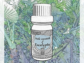 L'huile essentielle d'Eucalyptus