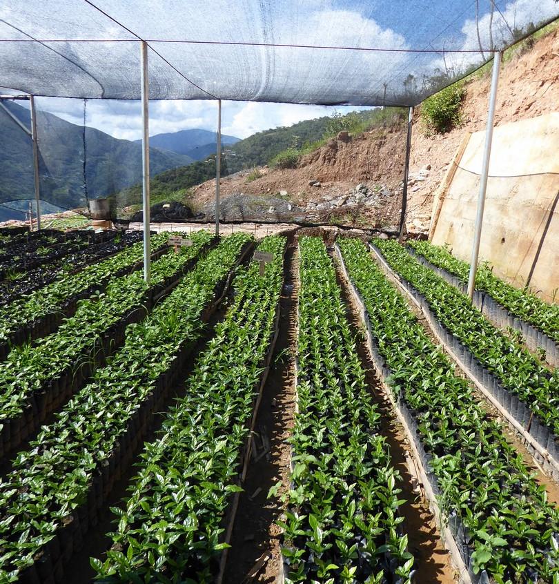 Bolivie – Cœur de foret ©