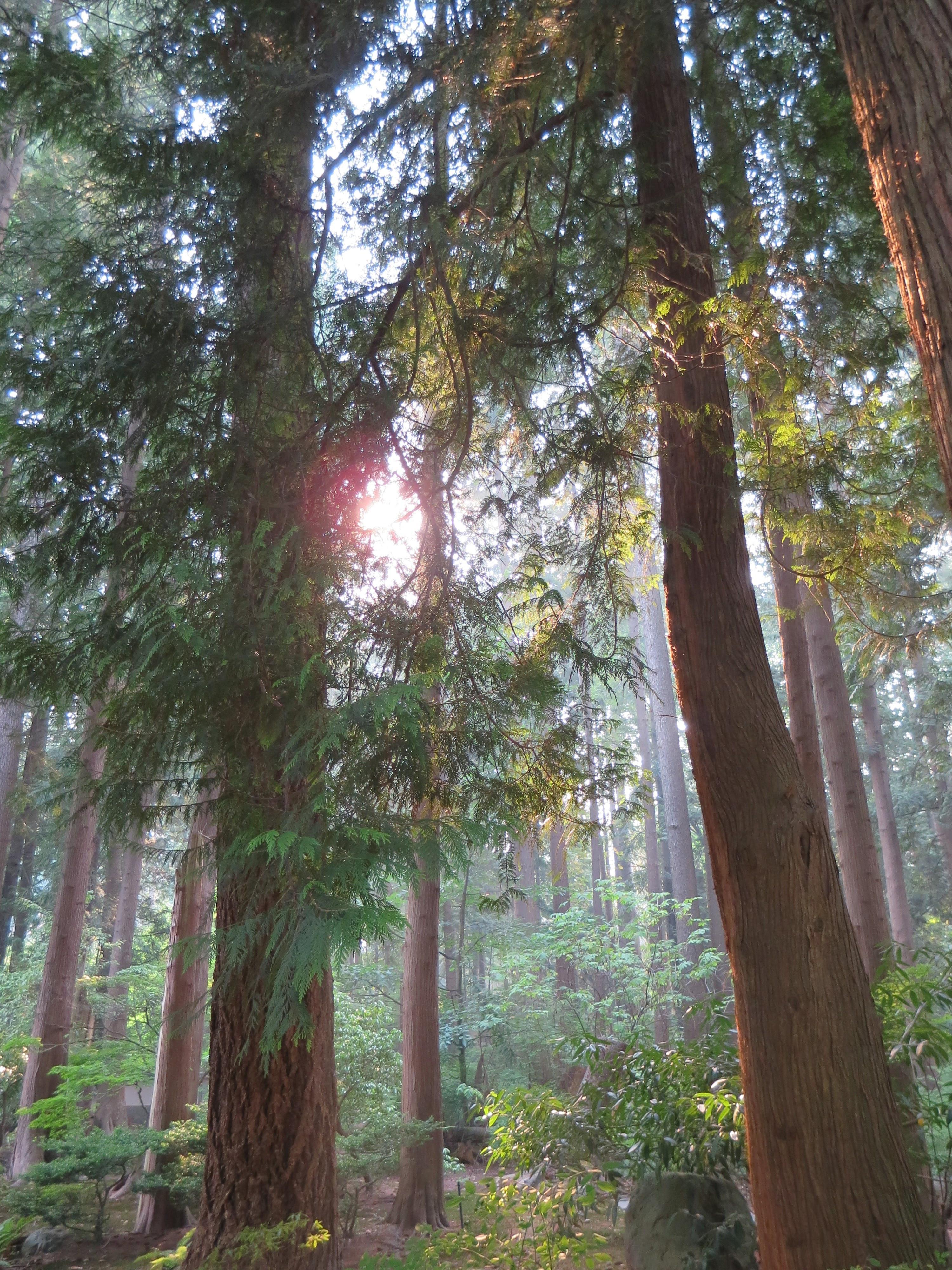 Spiritual Pathfinding- Initial Consult