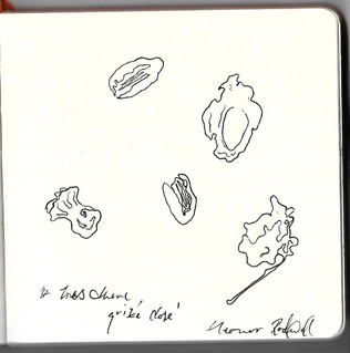 Oak galls, acorns, and peach pits