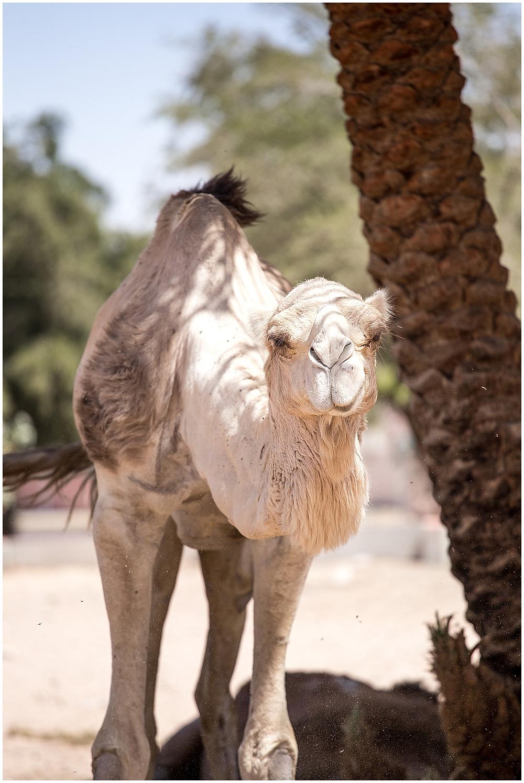 Jordan, Aqaba | Travel_0007.jpg