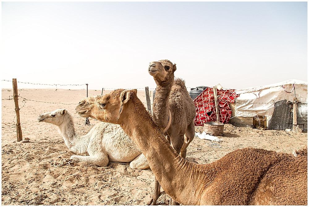 Jordan, Aqaba | Travel_0019.jpg