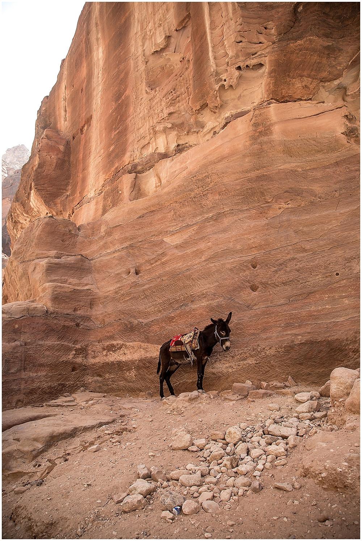Jordan, Aqaba | Travel_0036.jpg