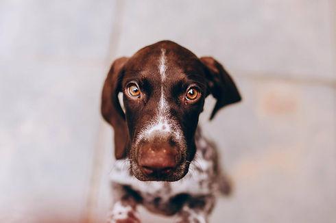 Welpenförderung Welpenschule Welt der Welpen Limmathunde