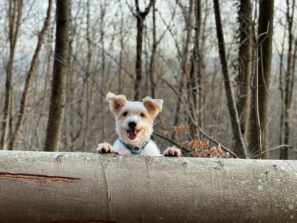 Hundetrainer Hundetraining Hundeerziehung Welpenkurs Welpenschule Welpenerziehung Welt der Welpen Hundeschule Limmathunde Baden Wettingen Würenlos Neuenhof Ehrendingen Aargau
