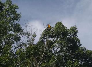 Preservação ambiental permite a vista de capivaras, araras e outros animais exóticos na AABB Cuiabá
