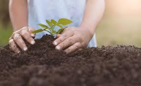 Dia das Crianças terá manhã ecológica na AABB Cuiabá