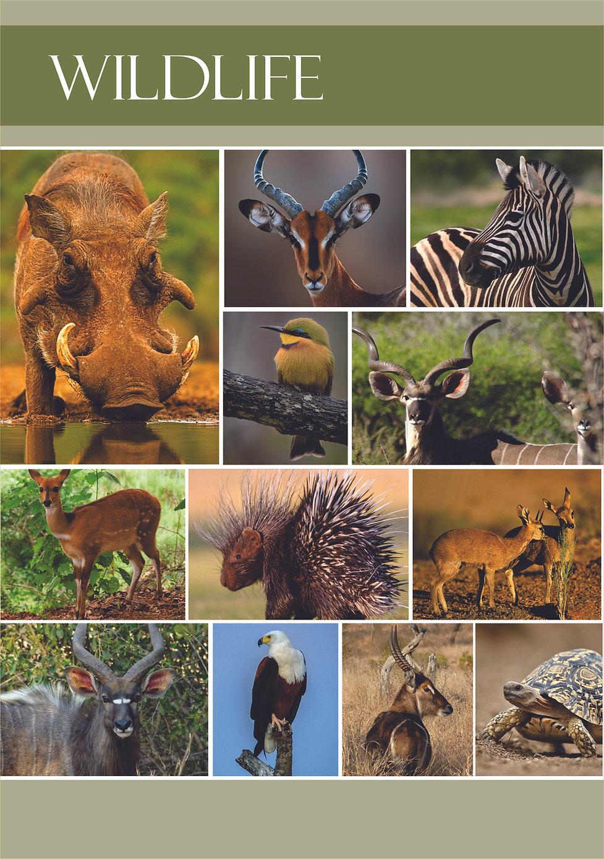 11 - Kolobe's Wildlife.jpg