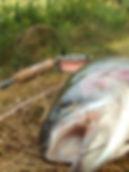 Ädelfiske & Flugfiske Östergötland
