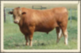 Breeder of the Ultimate Full Blood Wagyu beef