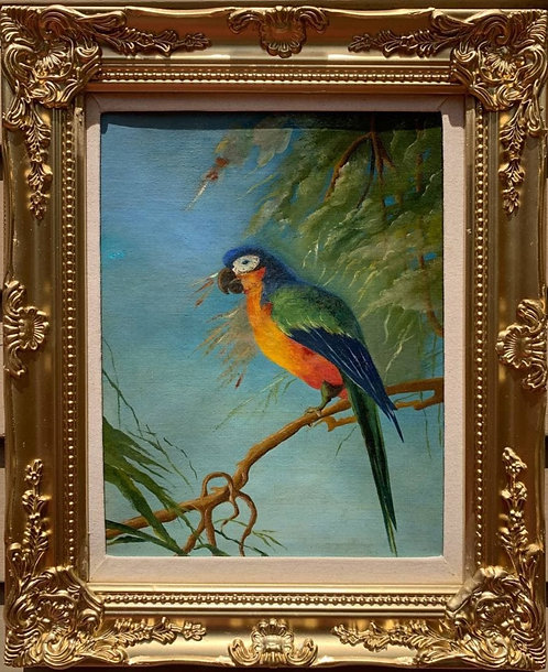British Antique Original Oil Painting on canvas, Parrot, framed, unsigned