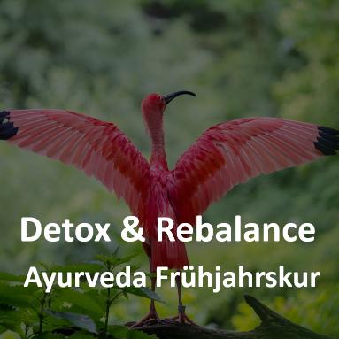 Detox & Rebalance