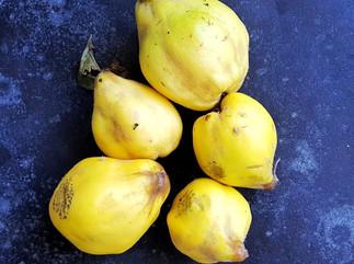 Liebesfrucht Quitte mit Kompott Rezept