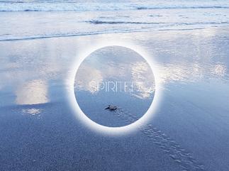 Spirits – Krafttiere: Die Weisheit der Schildkröte