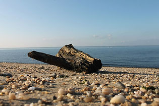 P_driftwood.jpg