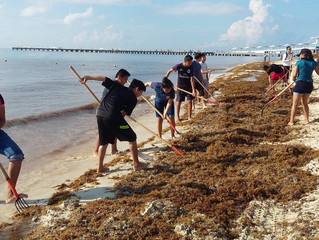 Engaging our Students into a Worthwhile and fun Weekend Community Service: Sargazo Clean Up.