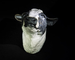 Cows head (Sold)