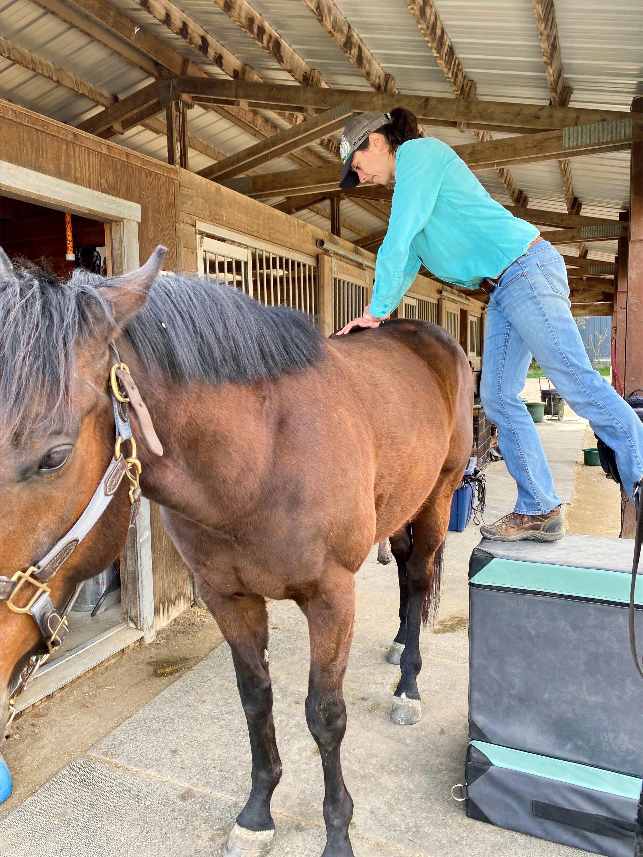 ADJUSTMENT (horse)