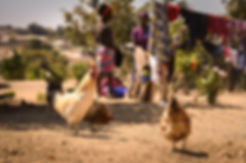 Humanitarian Photographer: Serving in Zambia