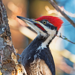 The Surprising Lesson from a Woodpecker