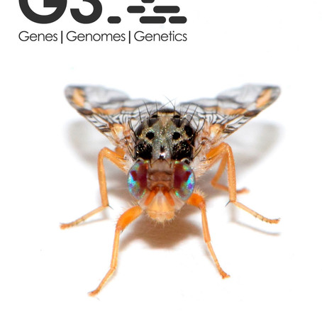 A New Diagnostic Resource for Ceratitis capitata Strain Identification Based on QTL Mapping