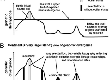 Widespread genomic divergence during sympatric speciation