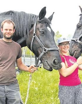 EN horses.jpg