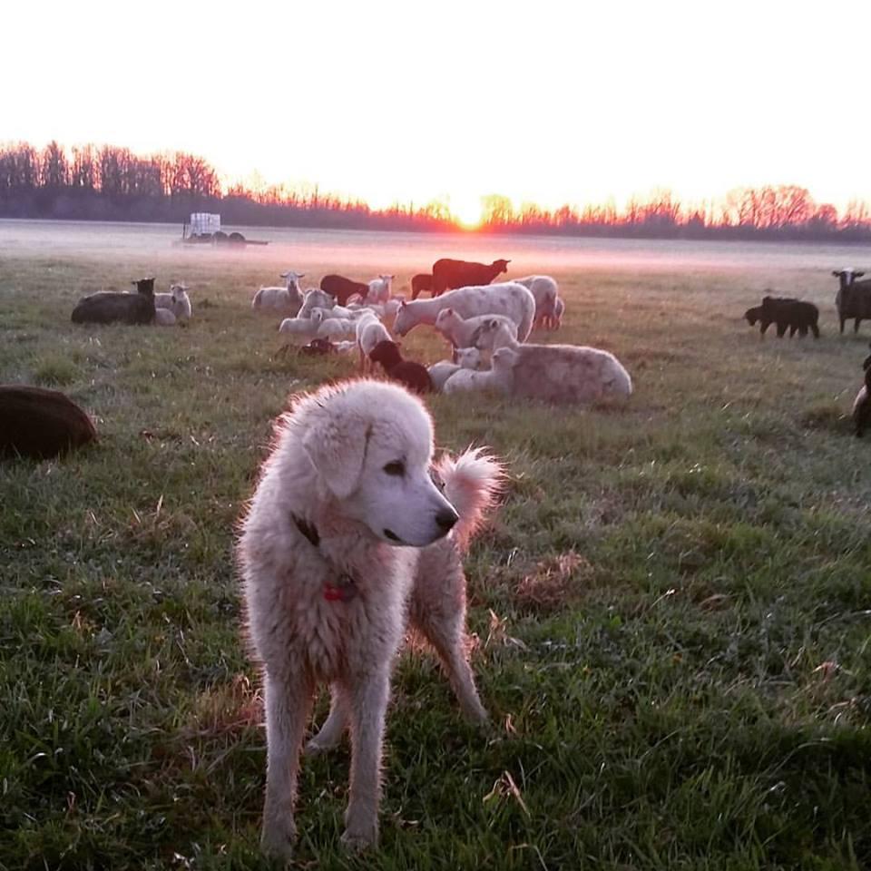 Lady puppy sunrise