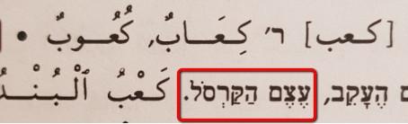טרמינולוגיה באנטומיה בערבית: העקב - האם כַּעבּ كَعب או עַקְבּ عَقب?