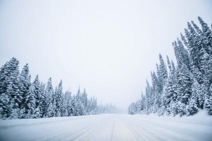 Snow - Nordic White