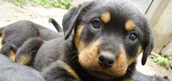 Puppy poisoned