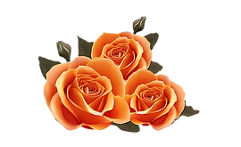 178-1785033_orange-roses-birthday-wishes-for-best-friend_edited.png
