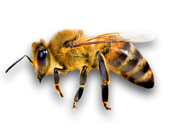 Pure Fine Foods - Manuka Honey Manufacturer