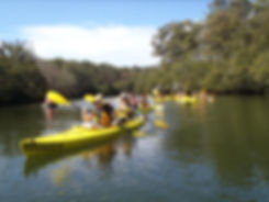 leisurely-lane-cove-river-national-park