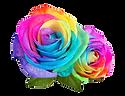 586-5867893_rainbow-multicolor-flowers-r