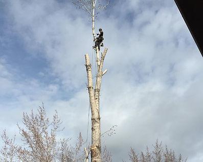 Utah Tree Planting Services