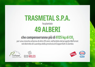 Trasmetal planted 49 trees in Africa