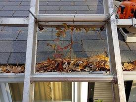 """<img src=""""gutters.png"""" alt=""""leaves filled inside of gutter"""">"""
