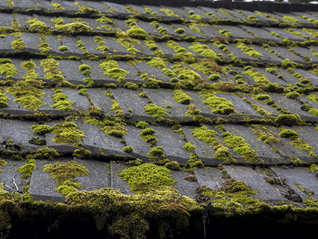 How To Remove Algae With Roof Washing!