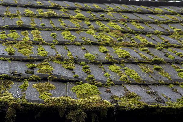 "<img src=""roofwithalgae.jpg"" alt=""Removing algae from roof in Delaware"">"