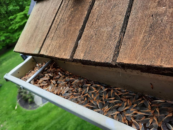 """<img src=""""gutters.png"""" alt=""""dirty gutters filled with seeds"""">"""
