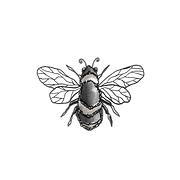 Original Illustration of a Bee by Catherine Cummins – The Queen B package grants you full access to the complete AFIREfi platform with one on one support and guidance
