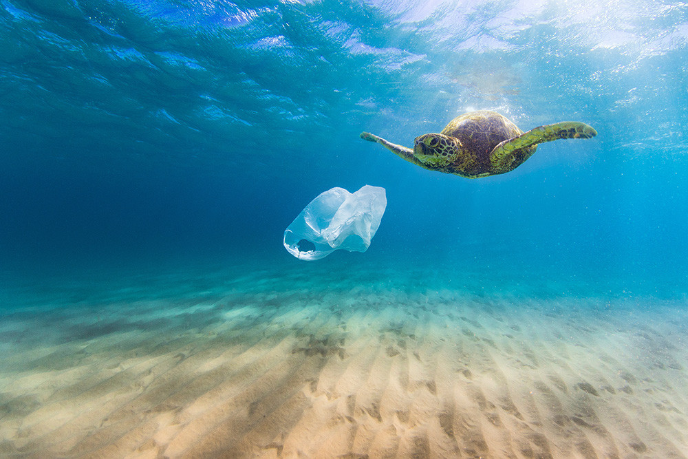 Turtle Meets a Plastic Bag in the Ocean