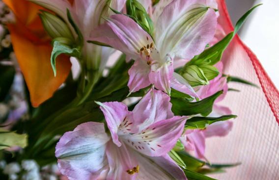 G7X - Bouquet di fiori_0016.jpg