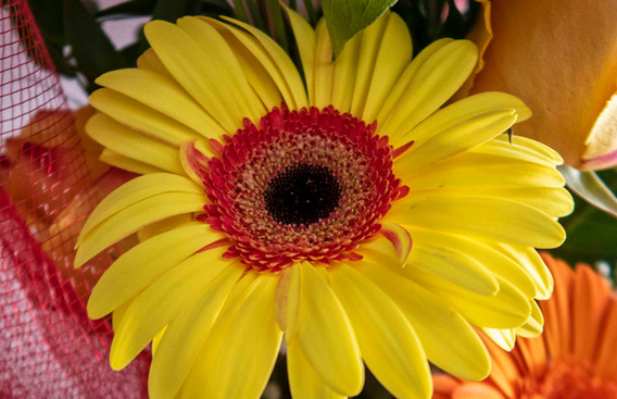 G7X - Bouquet di fiori_0003.jpg